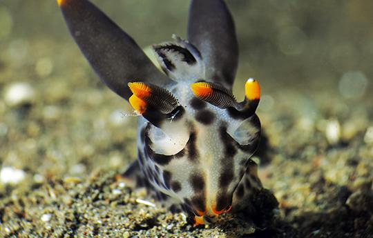 A nudibranch in Tulamben Bali