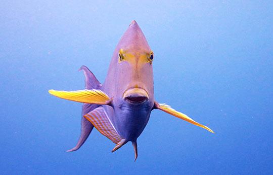 Fish in Tulamben Bali dive site
