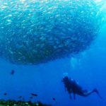 Diver with School of Jackfish at Drop Off in Tulamben Bali