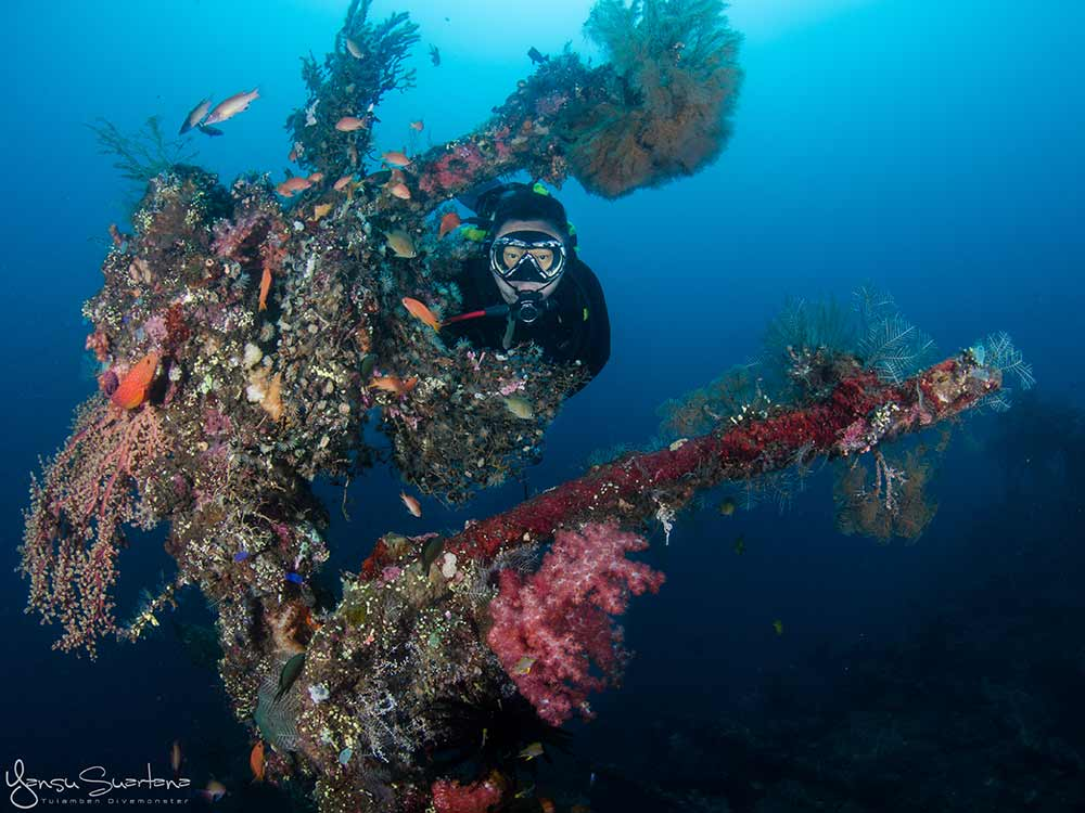 Coral and Scuba Diver at Liberty Wreck Dive Site in Tulamben Bali