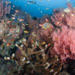 An array of corals and fish at Palung Palung scuba dive site in Bali