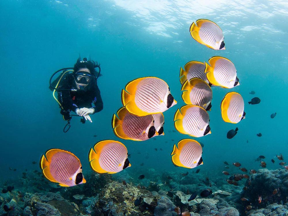 Woman diving with butterflyfish in Tulamben Bali