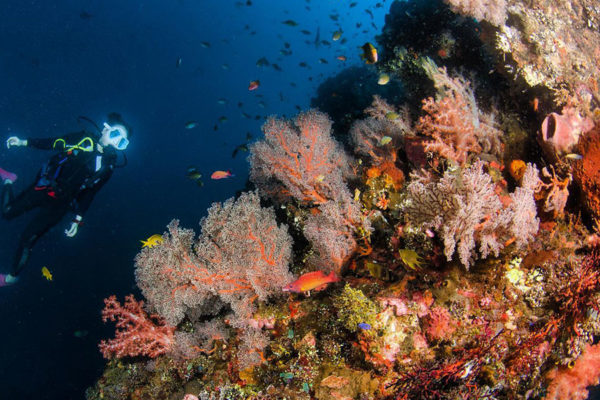 Scuba Diving Bali's Liberty Wreck: Everything You Need to Know